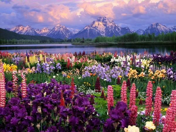 Montagne fleurie