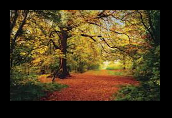 Paysage 001 - automne