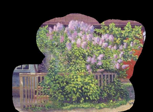 Buisson fleuri 02 (lilas)