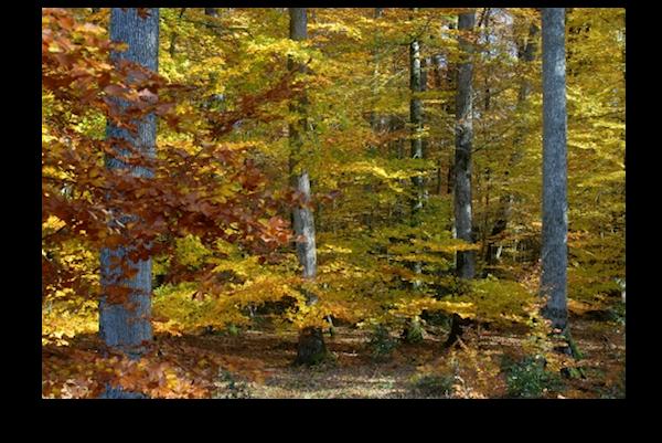 Forêt - belle - automne